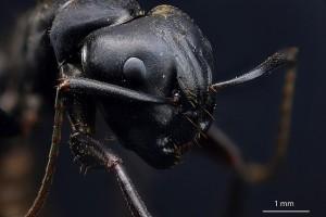 En myra i förstoring blir plötsligt en helt ny varelse. Bild av Macroscopic Solutions.