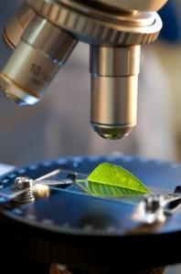 Mikroskop undersöker blad
