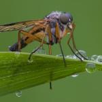 Exempel på makrofotografi av en insekt.