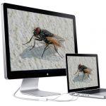 Förstoringen på ett digitalt mikroskop kan skilja beroende på bildskärments storlek.